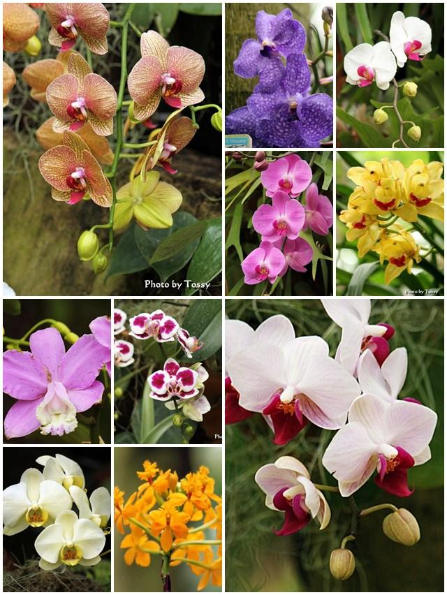 咲くやこの花館 ランコラージュ
