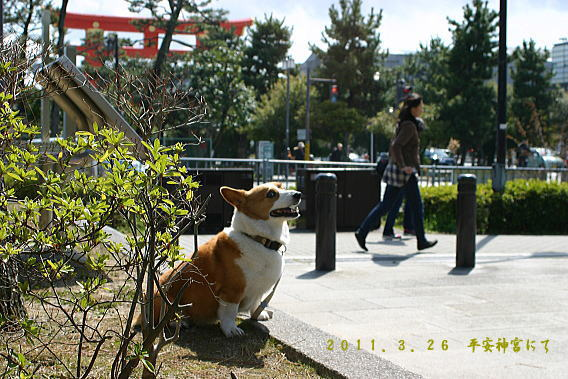 きなこ京都2