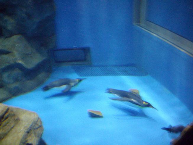 ペンギン館11