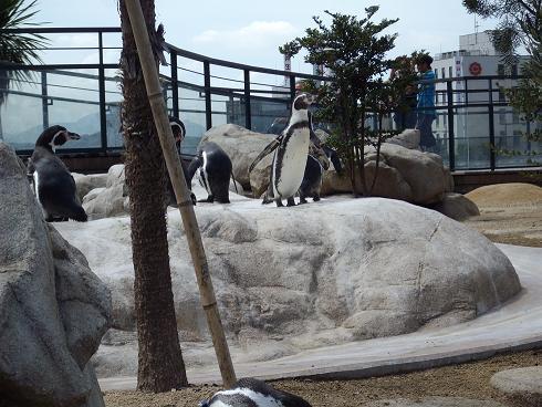 ペンギン館5