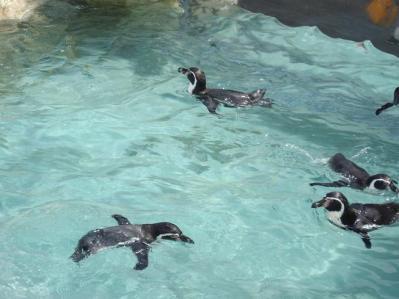 ペンギン館9