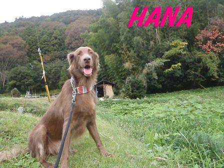 HANA07NOV11 042a