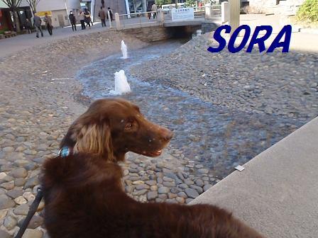 SORA12DEC11 053a