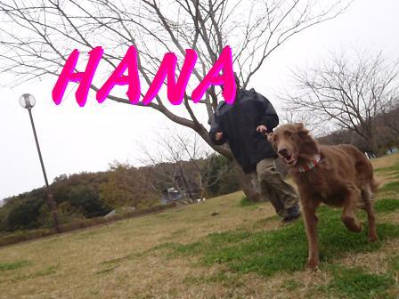 HANA02DEC11 209