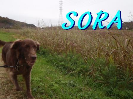 SORA02DEC11 205