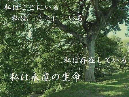 コピー ~ tree15SEP11 02501A