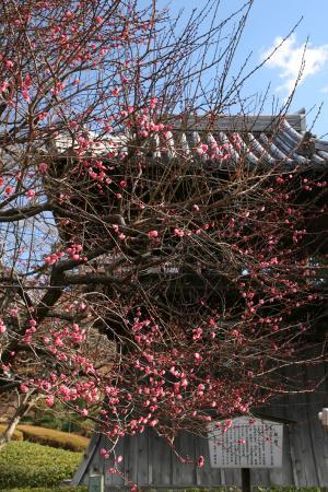 ばんな寺の冬
