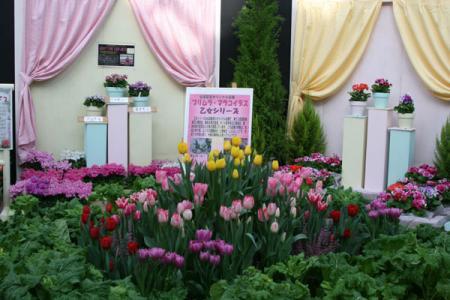 早春の花展