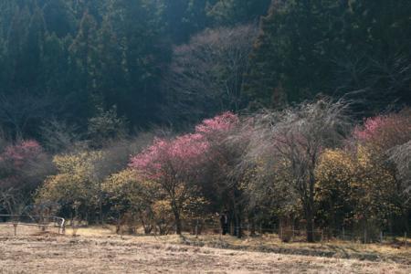 四季の森星野の冬