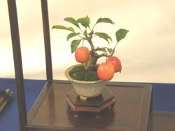 100111ラクザ展示会リンゴ