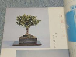 100120松平の杉