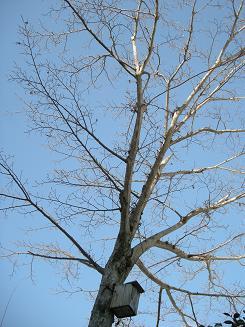 2010.1.22 雪の日のログ 038