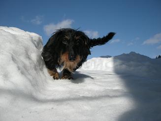 2010.1.22 雪の日のログ 023