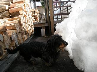 2010.1.22 雪の日のログ 033