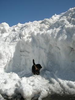 2010.1.22 雪の日のログ 027
