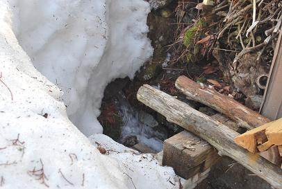 2010.2.26六里山の雪解け (6)
