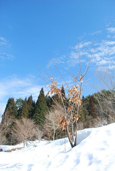 2010.2.26六里山の雪解け (12)