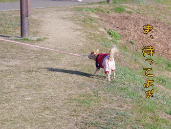 komusan_0210_002
