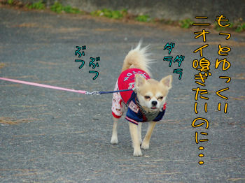 komusan_0210_003