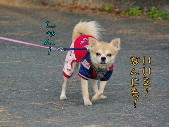 komusan_0210_004