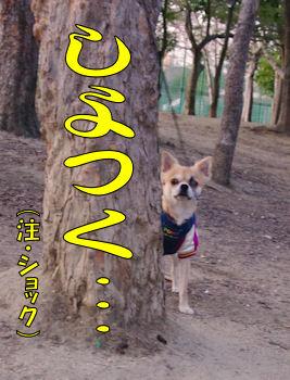 komusan_0210_006