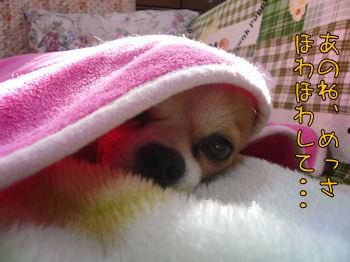 komusan_0222_003