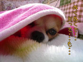 komusan_0222_004
