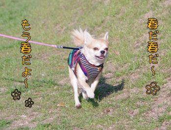 komusan_0304_006