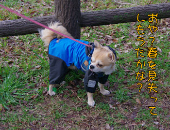 komusan_0304_007