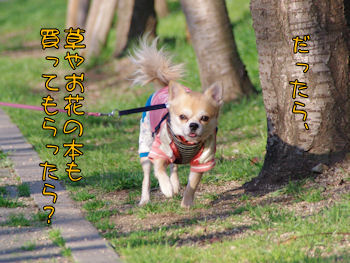 komusan_0309_004