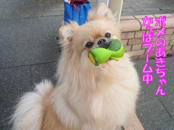 komusan_0311_001