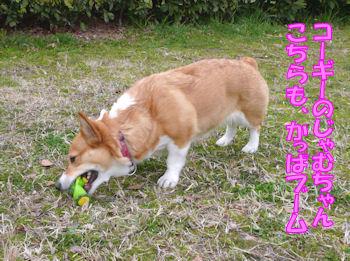 komusan_0311_002