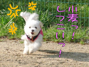 komusan_0311_008
