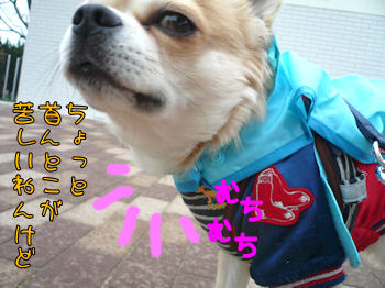 komusan_0313_001