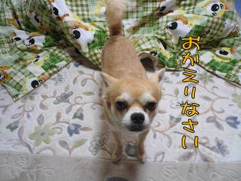 komusan_0316_005