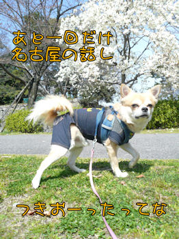 komusan_0328_001