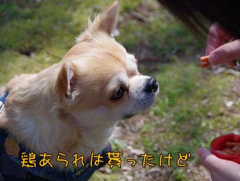 komusan_0328_006