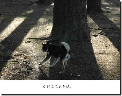 image1183689.jpg