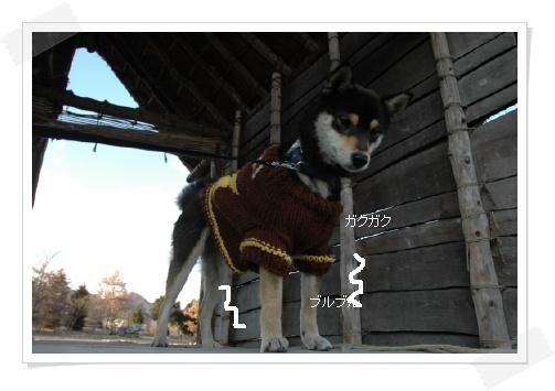image3721736.jpg