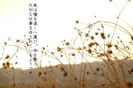 image3751794.jpg