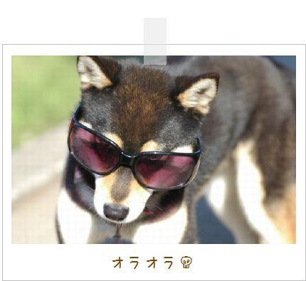 image4170003.jpg