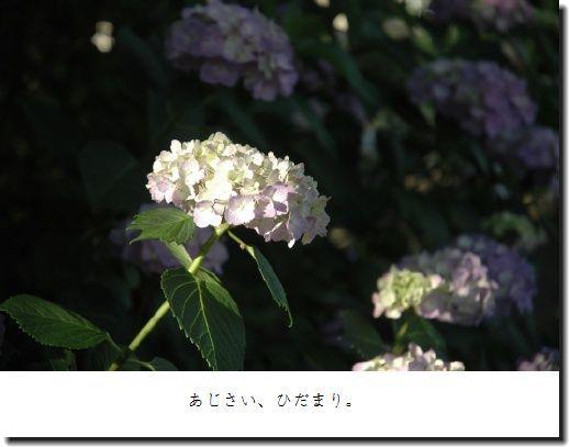 image4907493.jpg