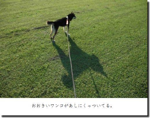 image4982841.jpg