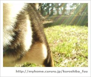 image6236282.jpg