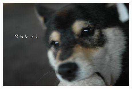 image6910447.jpg