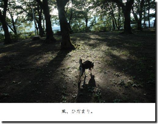 image7069766.jpg