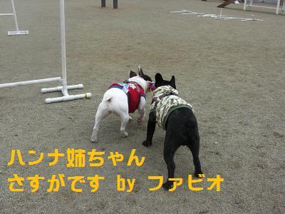 14_20100408004538.jpg