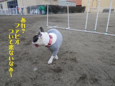 15_20110112223955.jpg
