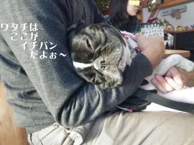 18_20101217164437.jpg