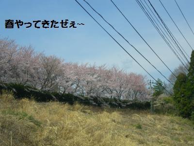 2_20120417111857.jpg